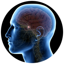 Pituitary disorder Treatment in Dubai